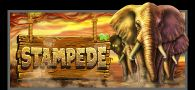 Stampede Online Slot Machine